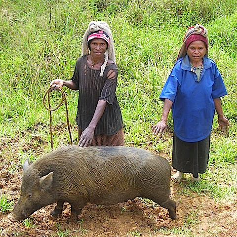 Women and Poverty in Rural Papua New Guinea